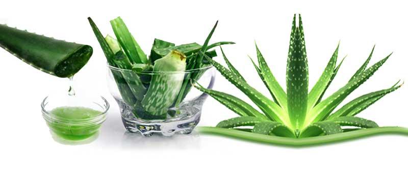 rastlina in sok Aloe vera