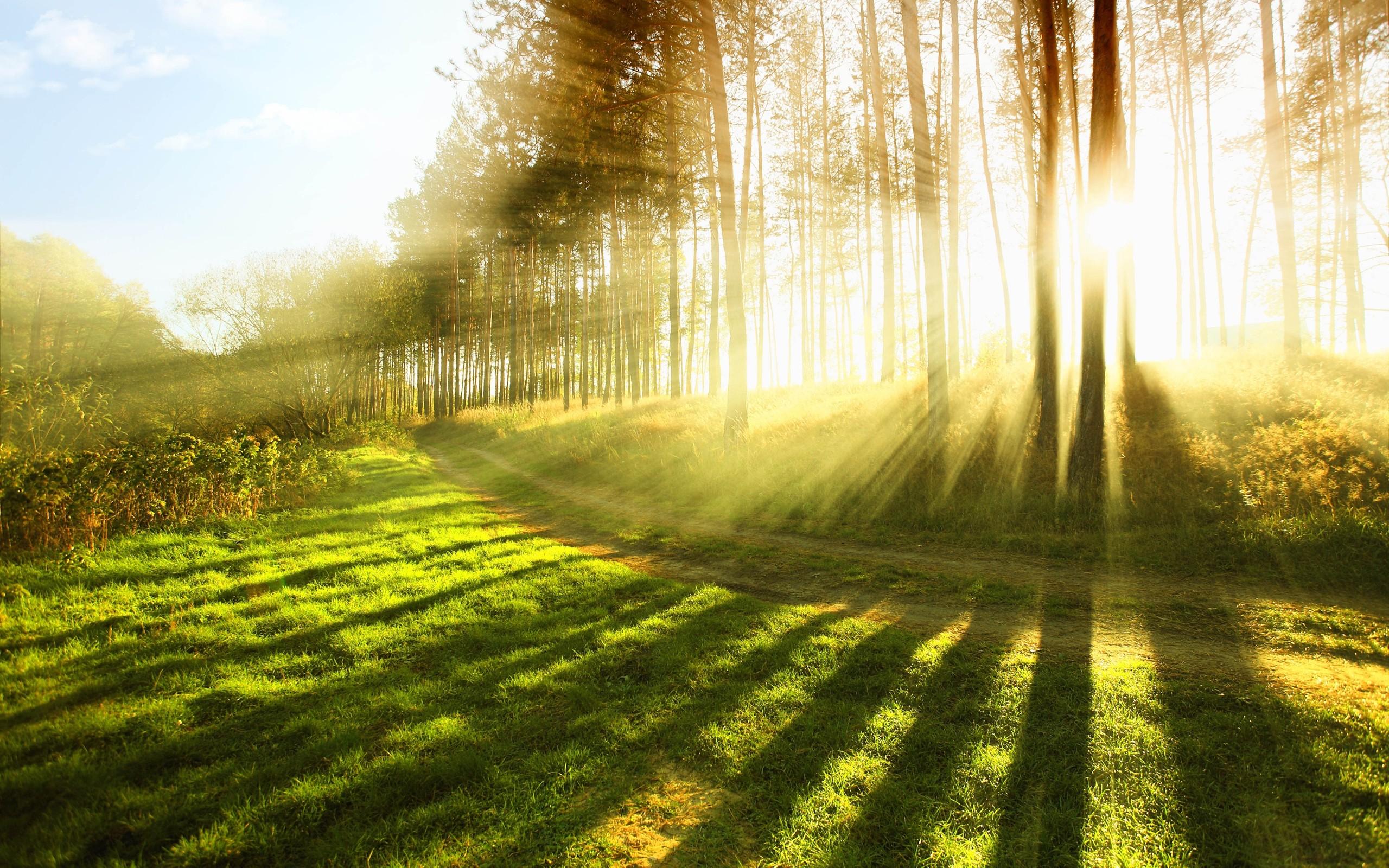 sončna svetloba v naravi