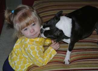 Bostonski terier z otroci