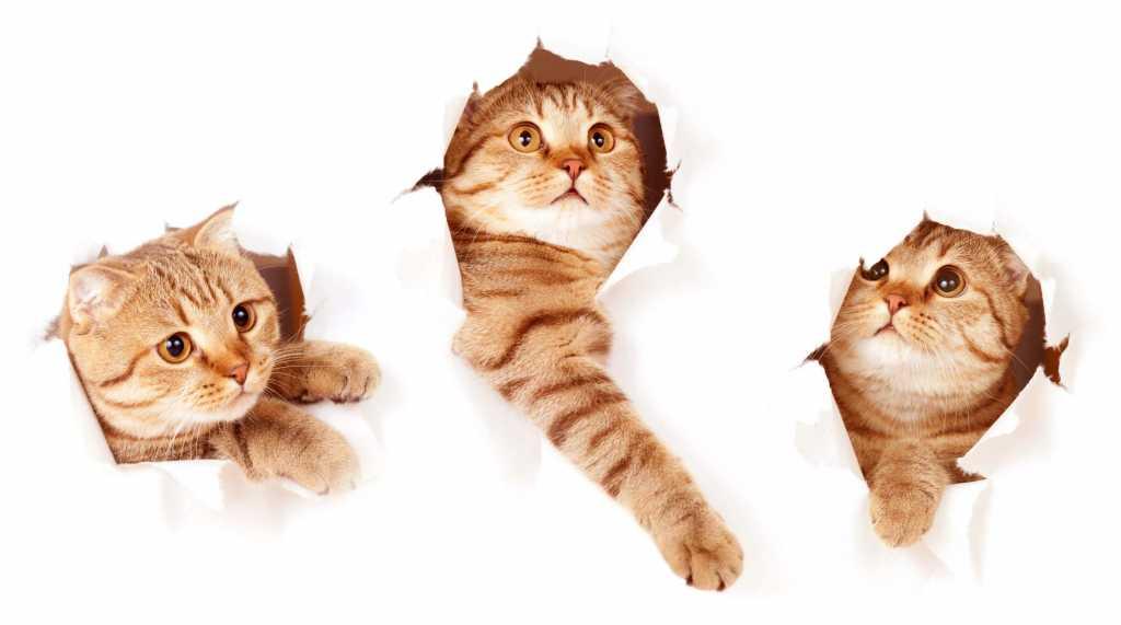 igranje mačk