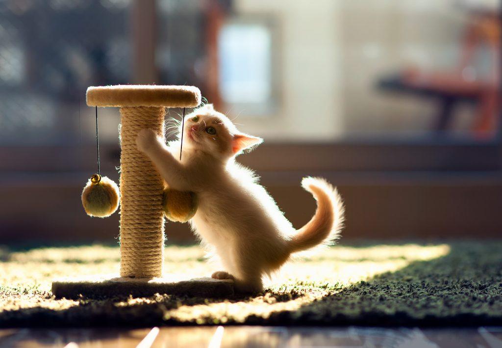 igranje z mačkami