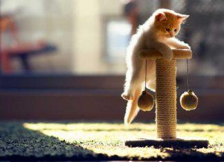 mačje igranje