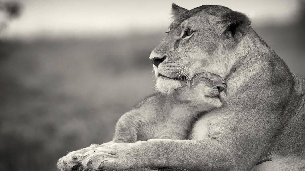 ljubezen mame
