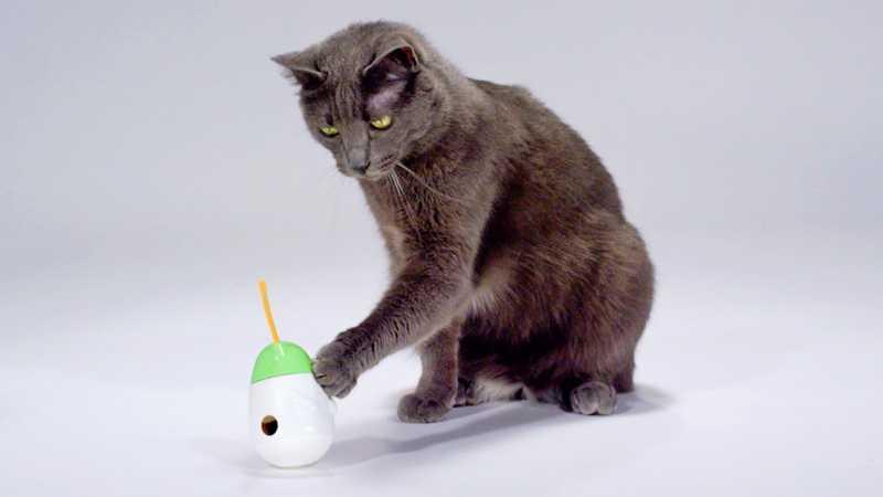 triki z mačkami