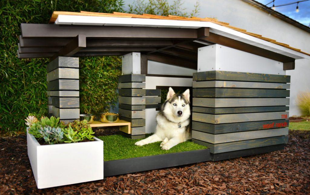 pasja hiša