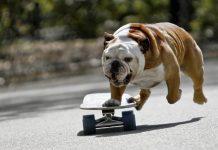 pes na longboardu