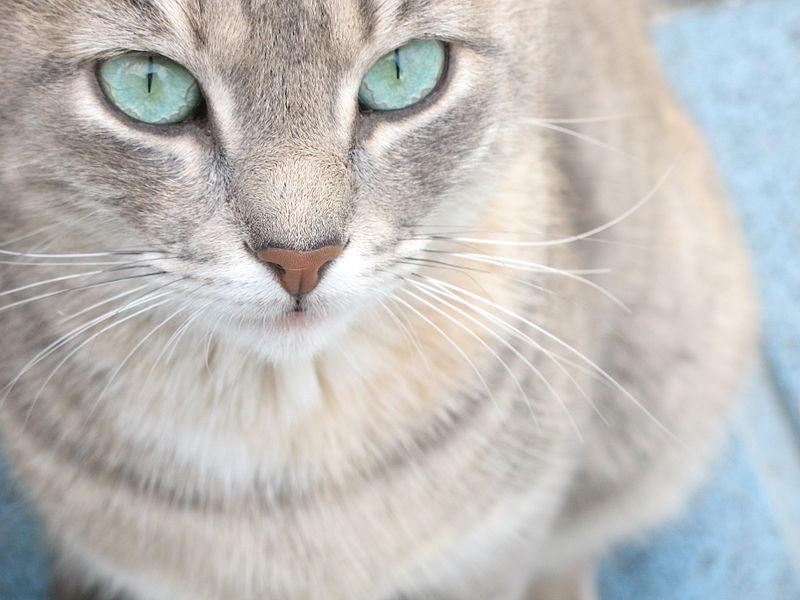mačje oči