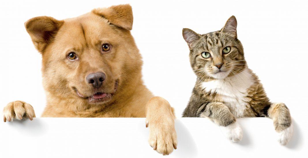 pes in mačka