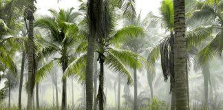 kokosovo olje