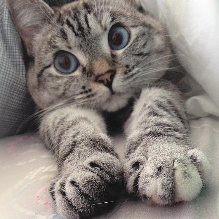 mačka, nala