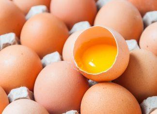 jajce, raziskava